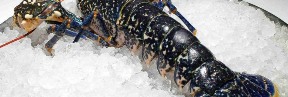 Blue lobster culinary tour of Spain and Portugal