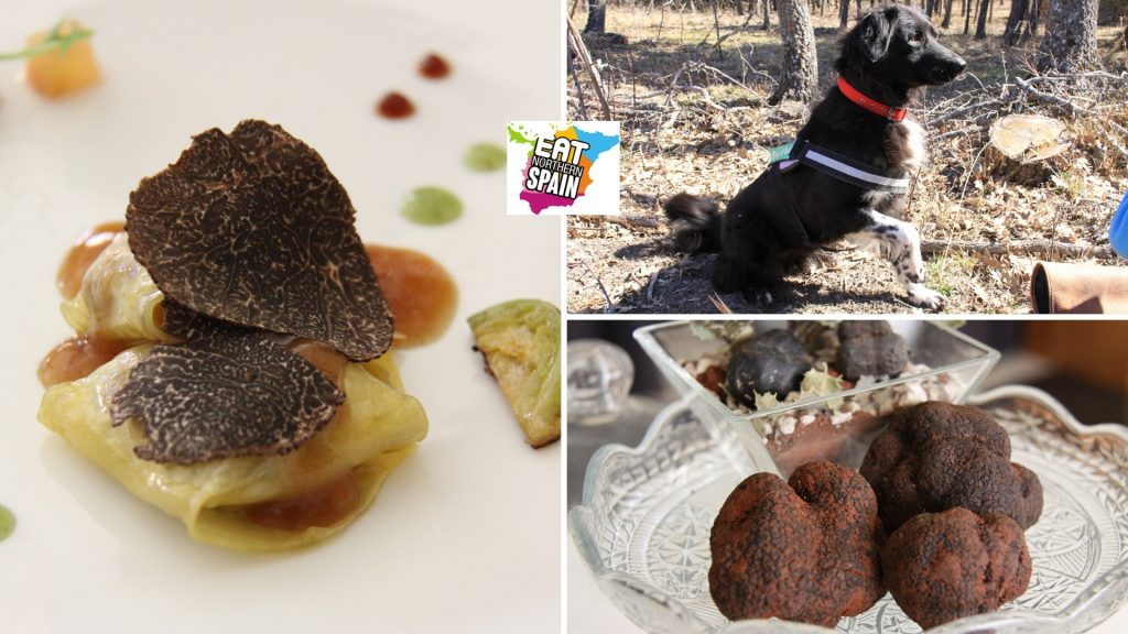 best guided tours of Spain truffle hunting